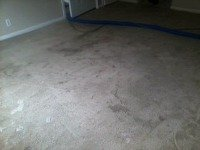 carpet cleaning lincoln ne - polyester rental